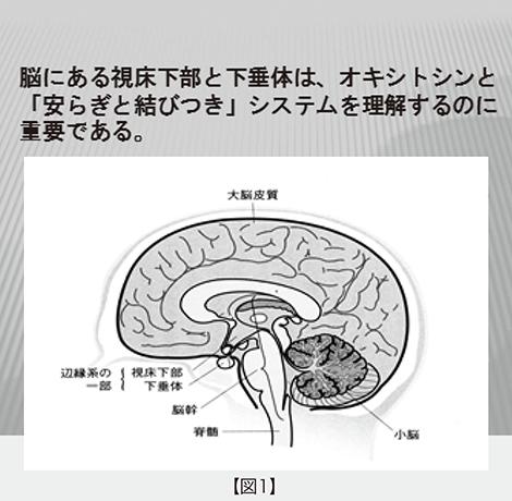 後葉 垂体 脳 下 脳下垂体